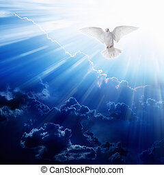 Holy spirit bird flies in blue sky, bright light shines from...