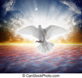 Holy spirit bird flies in skies, bright light shines from...