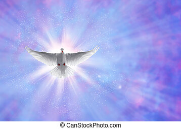 Holy spirit dove on shining sky with rays - White dove in a...