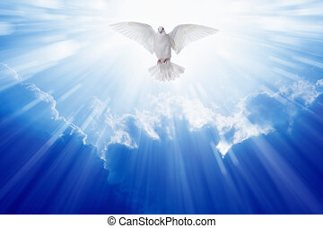 Holy spirit dove flies in blue sky, bright light shines from...