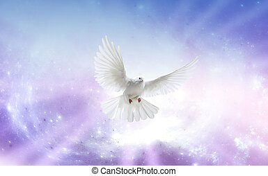 Holy Spirit Dove - White dove in a blue purple sky, symbol...