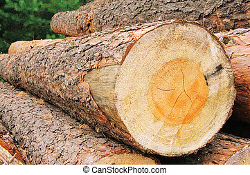 Holzstapel - stack of wood 32
