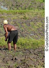 hombre, agricultura