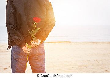 hombre, con, un, rosa, atrás, el suyo, espalda, esperar, para, love., romántico, fecha, en la playa