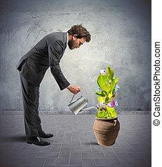 hombre de negocios, con, un, planta, de, dinero