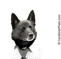 hombre de negocios, perro, cansado