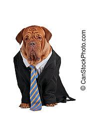 hombre de negocios, perro