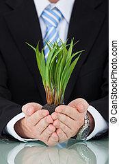 hombre de negocios, tenencia, saplings, en, escritorio de oficina