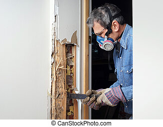hombre, el quitar, termita, dañado, madera, de, pared