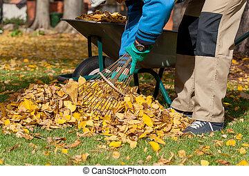 hombre, pasar el rastrillo, el, hojas