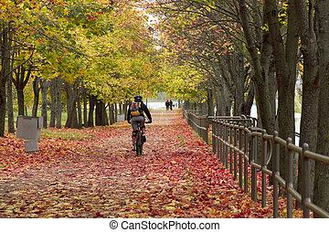 hombre, paseos, un, bicicleta, en, el, otoño, parque