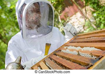 hombre, trabajando, abeja de la colmena