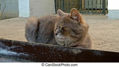 Home cat resting outside on concrete slab