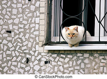 home curious cat sitting on a ledge, looking out into the street