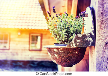 Home decoration with lavender flower pot