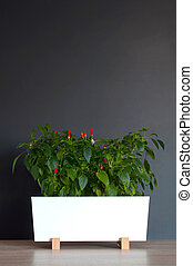 Home decorative small chilli red pepper in a flower pot