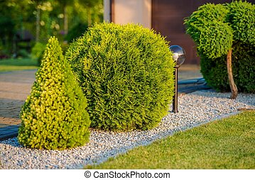 Home Front Garden Plants
