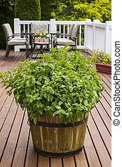 Home Garden Herbs on Outdoor Patio