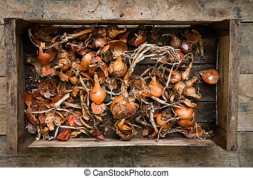 Home grown organic vegetables in a crate