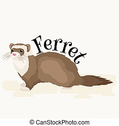 Home Pet, isolated ferret - Ferret in full growth lies...