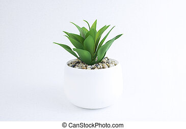 Home plant in a white pot isolated on white background. Green plants.