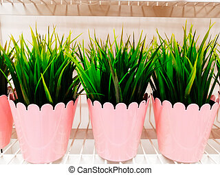 Garden plants in pots on a pink background. Home gardening and plant growing