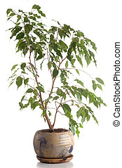Home tree in a pot