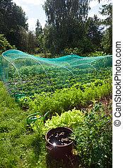 Home vegetable garden at summer