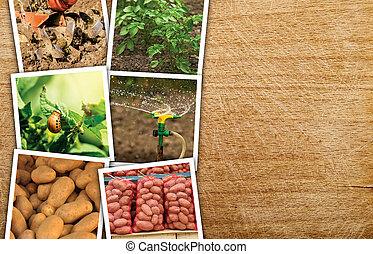 Homegrown potato photo collage