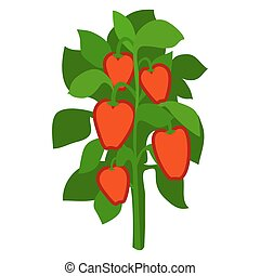Homegrown Ripe Red Bell Peppers with Green Leaves - ...