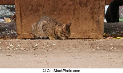 Homeless cat eating on a ground FHD footage