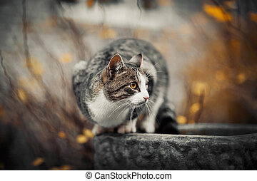 Homeless cat in the fall.