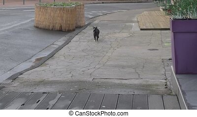 Homeless cat looks around and then walks away - Homeless...