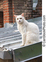 Homeless cat - master of the roof