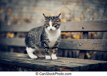 Homeless cat on a bench in the fall.
