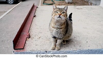 Homeless cat on concrete - Homeless tabby cat on concrete