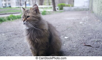 Homeless Cat on the Ground in the Park. Slow Motion