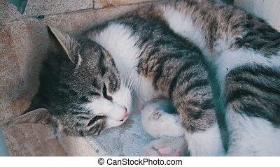 Homeless Cat Sleeps on the Street in the Summer