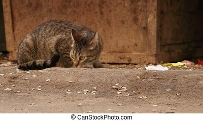 Homeless cat sniffing trying to find food near trash...