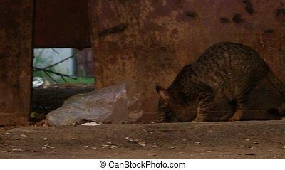 Homeless cat stalking on the ground