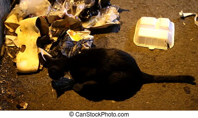 homeless cat