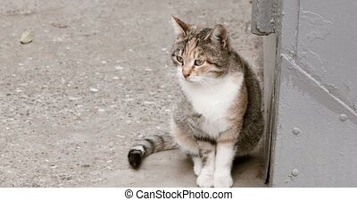 Homeless cat waiting in the street looking away