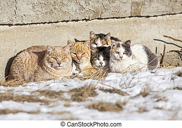 Homeless Cats - A group of feral cats huddled together to...