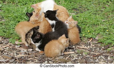 Homeless cats basking side by side a big flock