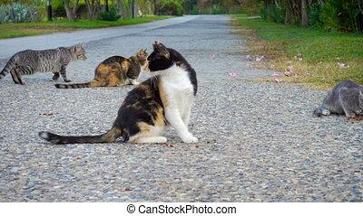 homeless cats eating feed food on street, Turkey