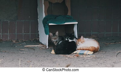 Homeless cats lie on the street near a makeshift cardboard booth. A group of stray cats in the city near old residential building. Human care for wild animals. Feral cats family. Slow Motion. 4K