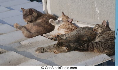 Homeless cats napping on the roof