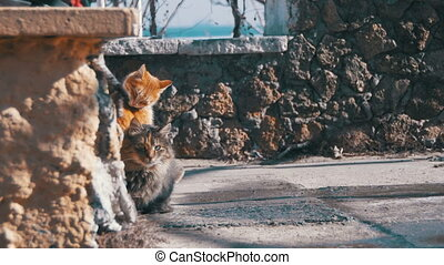Homeless Cats on the Street Eat Food in Early Spring