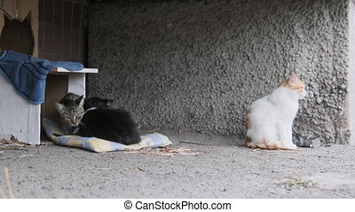 Three Homeless Cats Sits on the Street near a Makeshift Cardboard Booth. Human care for wild animals. Feral cats family. A group of stray cats in the city near old residential building. Slow Motion. 4K