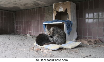 Two Homeless Cats Sits on the Street near a Makeshift Cardboard Booth. Human care for wild animals. Feral cats family. A group of stray cats in the city near old residential building. Slow Motion. 4K